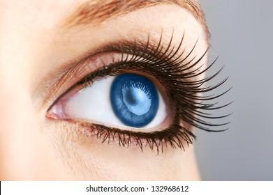 woman dark blue eye with false  extremely long lashes