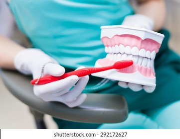 Woman dentist with gloves showing on a jaw model how to clean the teeth with tooth brush properly and right