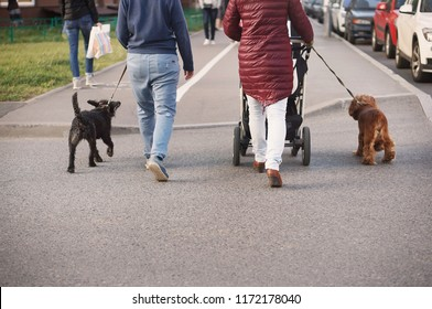 woman with a dog and a baby stroller in autumn clothes walking around the city. life, urban living, streets, sidewalks, walking, buildings, architecture, social life, daily