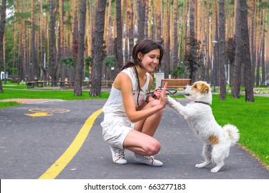 Woman and dog playing and having fun outdoors in a park