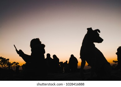 Woman and dog silhouettes at sunrise in Brazil