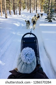 Woman dog sledding through the snow