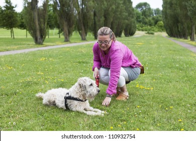 Woman and dog spending time together on a field in the park.