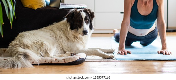 woman doing yoga at home with dog and laptop