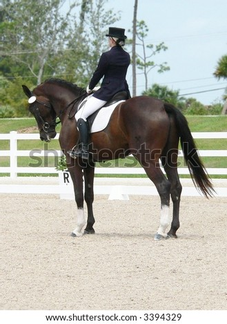 Woman Dressage Rider Formally Dressed Top Stock Photo (Edit Now ... 89faae144a7