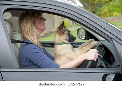 Woman driver with a puppy Belgian Sheperd dog in the driver's seat too !