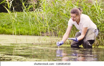 Woman ecologist getting sampels of the plants in the lake. Scientific fieldwork. Early morning