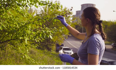 Woman ecologist getting samples of foliage near the thermal power plant. Damage appreciate to nature in an urban environment