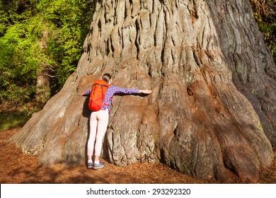 Woman embraces big tree in Redwood California