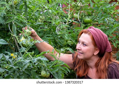 Woman is examining her tomato plants in the garden