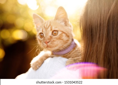 Woman in the fall park kissing her lovely fluffy cat. Girl and her ginger cute kitten walking together outdoor. Seasons, pets, friendship, lifestyle concept. Friend of human. Autumn arrives.