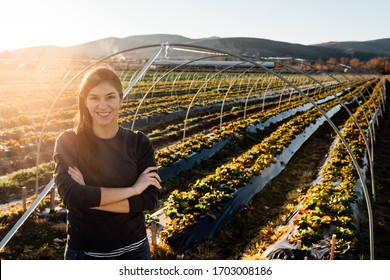 Woman farmer agronomist inspecting strawberry crops growing in the fruit farm field.Nature lover.Sustainable ecological grow.Examining young crops,quality monitoring.Agriculture food industry concept
