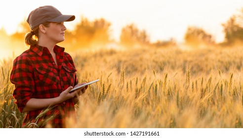 A woman farmer with digital tablet. Smart farming and digital transformation in agriculture.