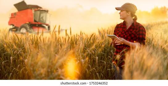 Ein Landwirt untersucht das Getreidefeld und sendet Daten aus der Tablette an die Cloud. Intelligente Landwirtschaft und digitale Landwirtschaft.