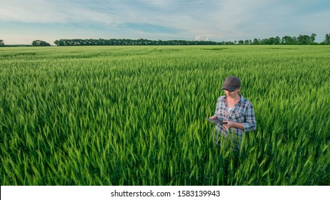 A woman farmer with a tablet in her hands stands in a vast field of green wheat