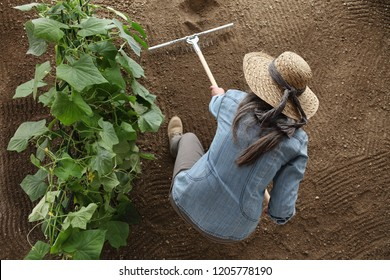 woman farmer working with rake in vegetable garden, raking the soil near a cucumber plant, top view and copy space template