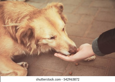Woman feeding homeless dog on the street, closeup
