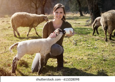 Woman is feeding a lamb with bottle of milk, concept animal welfare and rearing