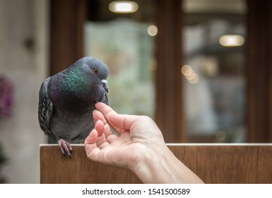 Woman feeding and touching a tame pidgeon on a bench.