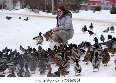 Woman feeds a lot of ducks in winter
