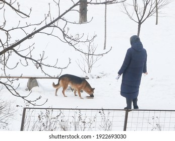 woman feeds homeless dog eating food in street in winter time, closeup