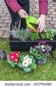 Woman filling potting soil into a flower box after planting the flowers