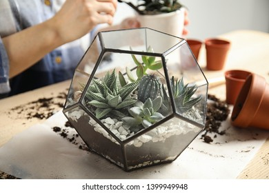 Woman and florarium with succulents at table, closeup. Transplanting home plants