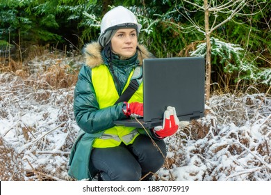Woman forest scientist using laptop near spruces