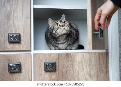 Woman found her cat in a cupboard. Portrait of a frightened cat with big eyes. A woman's hand opens the wardrobe in which the cat is sitting.