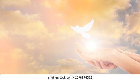 Woman and free bird on sky background