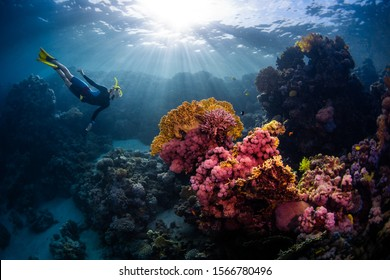 Woman freediver swims underwater and explores vivid coral reefs
