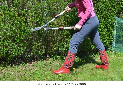 Woman in garden clothes trimming a garden hedge with scissors