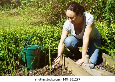 Woman in garden at gardening in planting bed with asparagus on a sunny summer day