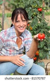 Woman in garden kneeling by tomato plant