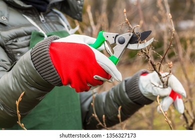 Woman gardener in autumn garden cut with scissors