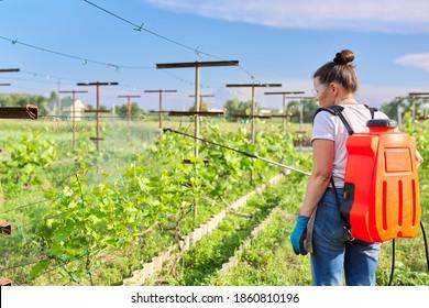 Woman gardener farmer with backpack pressure sprayer sprays vineyard in spring season, against fungal diseases and pests