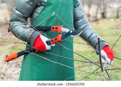 Woman gardener with shears and branches