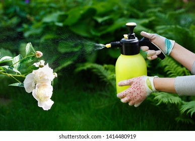 Woman gardener spraying flowers in the home garden