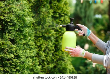 Woman gardener spraying plants in the home garden
