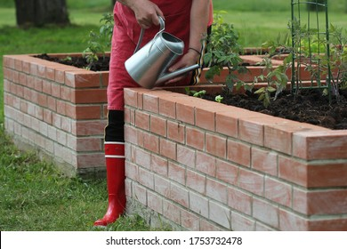 Woman gardener watering plants. Raised beds vegetables gardening.