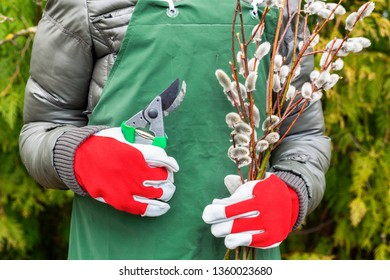 Woman gardener with willow bush branches and scissors
