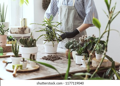Woman gardeners hand transplanting tropical flowers in white pots on the wooden table. Concept of home garden.