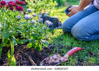 Woman gardening in backyard on a sunny spring day - low to ground, soft focus