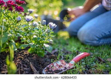 Woman gardening on a sunny spring day with garden spade in foreground- hands only, soft focus
