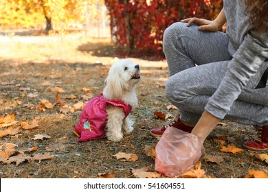 Woman gathering dog poo in park