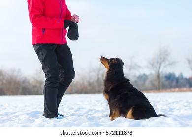 woman give an Australian Shepherd dog in the snow feed