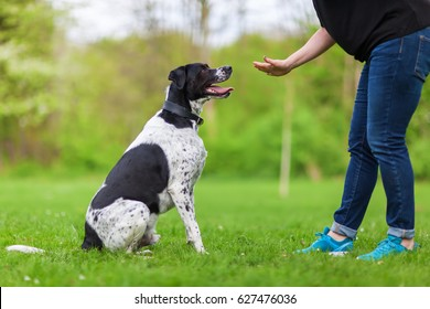 Dog Training Images, Stock Photos & Vectors | Shutterstock