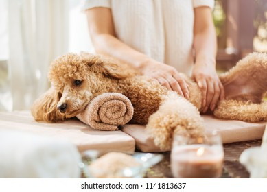 Woman  giving body massage to a  dog. Spa still life with aromatic candles, flowers and towel.