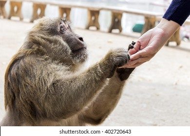 woman giving food to the monkey, nature light and over [blur and select focus background]