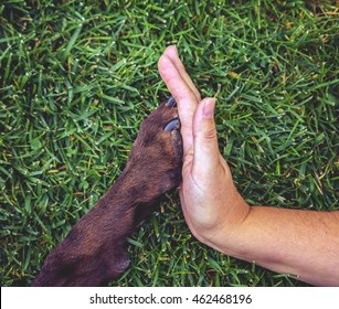 a woman giving a high give to the paw of a chocolate labrador retriever outdoor at a park in summer time representing love, friendship, teamwork or other concepts in a natural green grass background